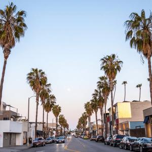 Palm Trees Street Venice
